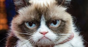 arabuko_marketing_digital_grumpy_cat_002